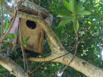 Our possum in its house